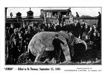 Postcard depicting Jumbo, killed in St. Thomas, September 15, 1885